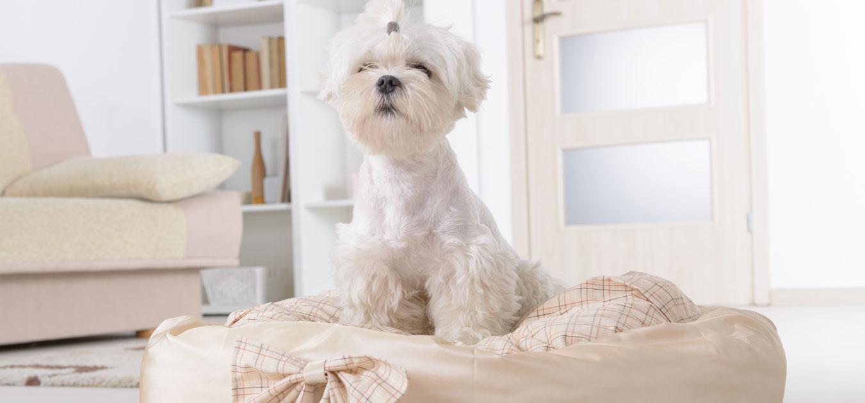 Evcil hayvanlarınızla birlikte yaşayabileceğiniz düzenli bir ev için 7 adım
